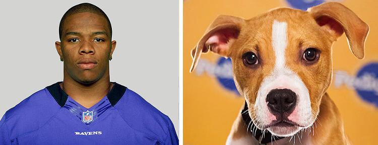 <p>Name: Ray Rice<br /> Breed: Ravens<br /> Position: Running Back<br /> Age: 26</p>  <p>Name: Cash<br /> Breed(s): Pit Bull<br /> Sex: Male<br /> Age: 15 weeks<br /> Adoption Organization: Greene Street Animal Rescue</p>  <p>One of these warriors has a not-so-secret belly rub problem. We'll let you decide who might be lying supine with his legs in the air on the field on Sunday.</p>