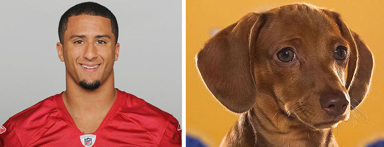 <p>Name: Colin Kaepernick<br /> Breed: 49ers<br /> Position: QB<br /> Age: 25</p>  <p>Name: Harry<br /> Breed(s): Chocolate Dachshund Smooth<br /> Sex: Male<br /> Age: 12 weeks<br /> Adoption Organization: Furever Dachshund Rescue</p>  <p>One of the game's key match-ups. Kaepernick rose to glory as a replacement for regular QB Alex Smith. The tattooed 25-year-old is a threat in the air and on the ground. But don't underestimate &quot;Dirty&quot; Harry and his 3-inch legs--his kind has been known to take down bears. A hipster prospector ain't no thang.</p>