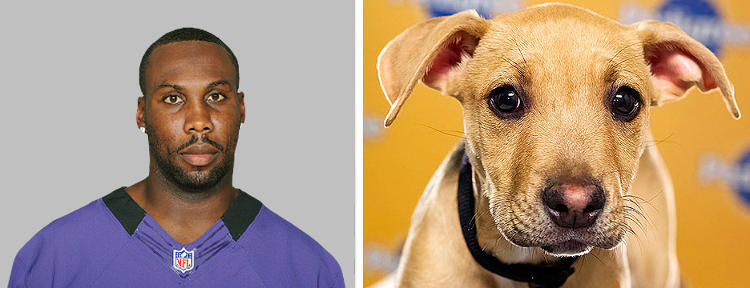 <p>Name: Anquan Boldin <br /> Breed: Ravens <br /> Position: Wide Receiver <br /> Age: 32</p>  <p>Name: Jenny<br /> Breed(s): Pit Bull/Hound mix<br /> Age: 13 weeks<br /> Adoption Organization: Pitty Love Rescue</p>  <p>Analysis: As of press time, Jenny was making field poopy, so I'm afraid this one automatically goes to Boldin.</p>