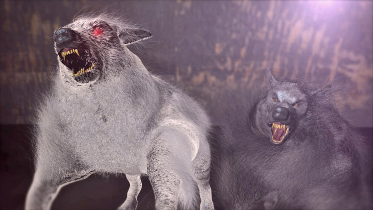 mountain monsters wampus cat wwwpixsharkcom images