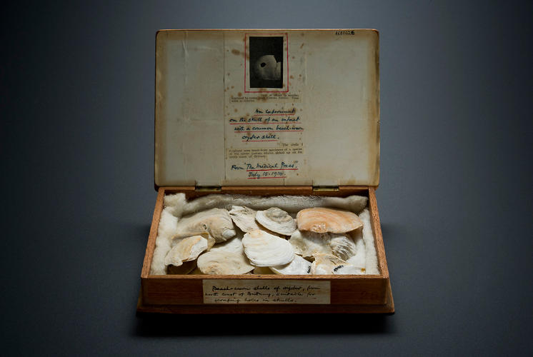 <p>Cigar box containing twenty-four oyster shells. (For scooping out brains?) [Science Museum, London]</p>