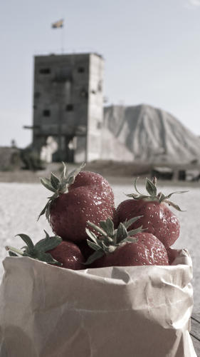 <p>A completely candid, not-at-all-staged shot of some strawberries enjoying their time on vacation.</p>