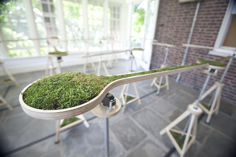 <p>Moss is gathered from urban environments.</p>