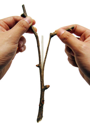 <p>The presentation and the high retail price are meant to illustrate how costly the production of wooden chopsticks--an industry that fells 25 million trees in China annually--really is.</p>