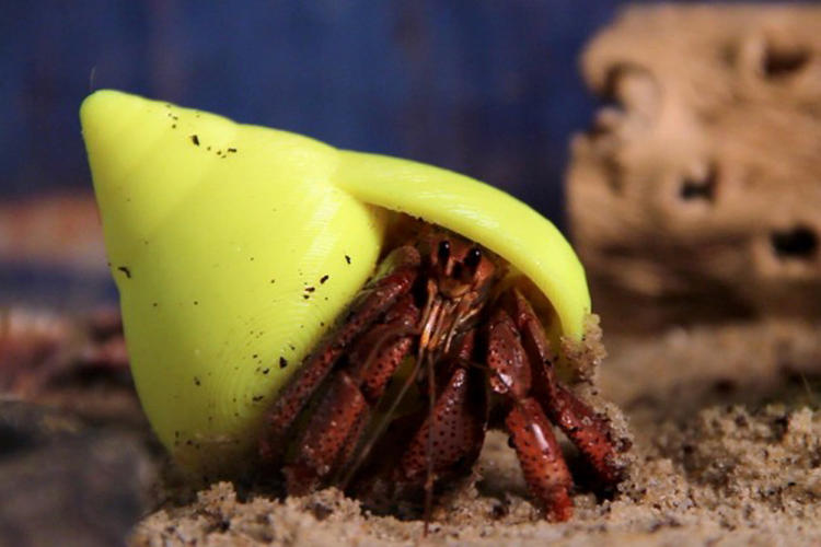 <p>Large numbers of homeless hermit crabs led Makerbot and TeamTeamUSA to design and print eco-friendly shells for the crustaceans. Working with a biological researcher, the team developed a shell comparable to those found in the wild, matching the natural found version in roominess and durability.</p>