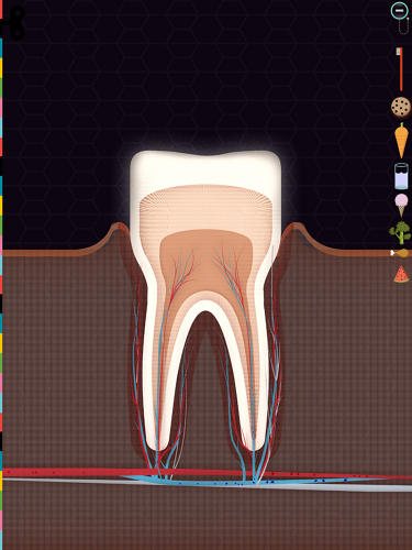 <p>Or how a tooth in your jaw feels pain.</p>