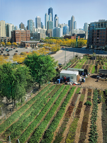 "<p>Many urban farms, no matter how different the cities around them may be, share a common origin story. Most occupy sites that were once vacant and neglected, and in turning those sites back into thriving landscapes, they have contributed to the overall revitalization of surrounding blocks.</p>  <p>According to Ken Dunn, the founder and director of The Resource Center in  Chicago, there is a direct connection between vacant land and the condition of urban communities. Simply by making sure that no city lot sits neglected, he suggests, we can ensure better economic stability, safety, community engagement, and quality of life. Dunn began developing this theory and others while working on a PhD in philosophy at the University of Chicago in the 1960s. ""We specifically looked at resources that had been overlooked, such as recyclable trash and vacant lots, and their connection to long-term unemployment."" With a combination of evidence and instinct, Dunn decided to create City Farm in 2000 in order to apply his ideas and see what kind of impact local food production could have on the city. The results speak for themselves.</p>"