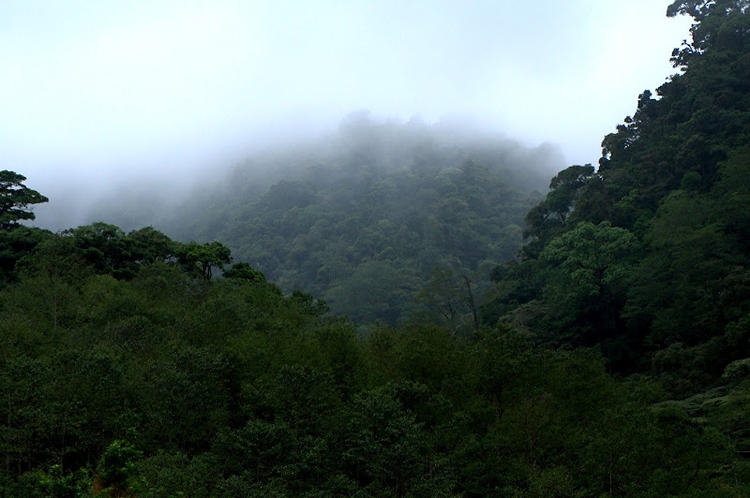 <p>Trees in the cloud forest contribute to water yield by precipitating water from clouds onto needles, a process known as &quot;fog drip.&quot; Photo by Wikimedia Commons user <a href=&quot;http://commons.wikimedia.org/wiki/File%3ARedwood_National_Park%2C_fog_in_the_forest.jpg&quot; target=&quot;_blank&quot;>Michael Schweppe</a>.</p>