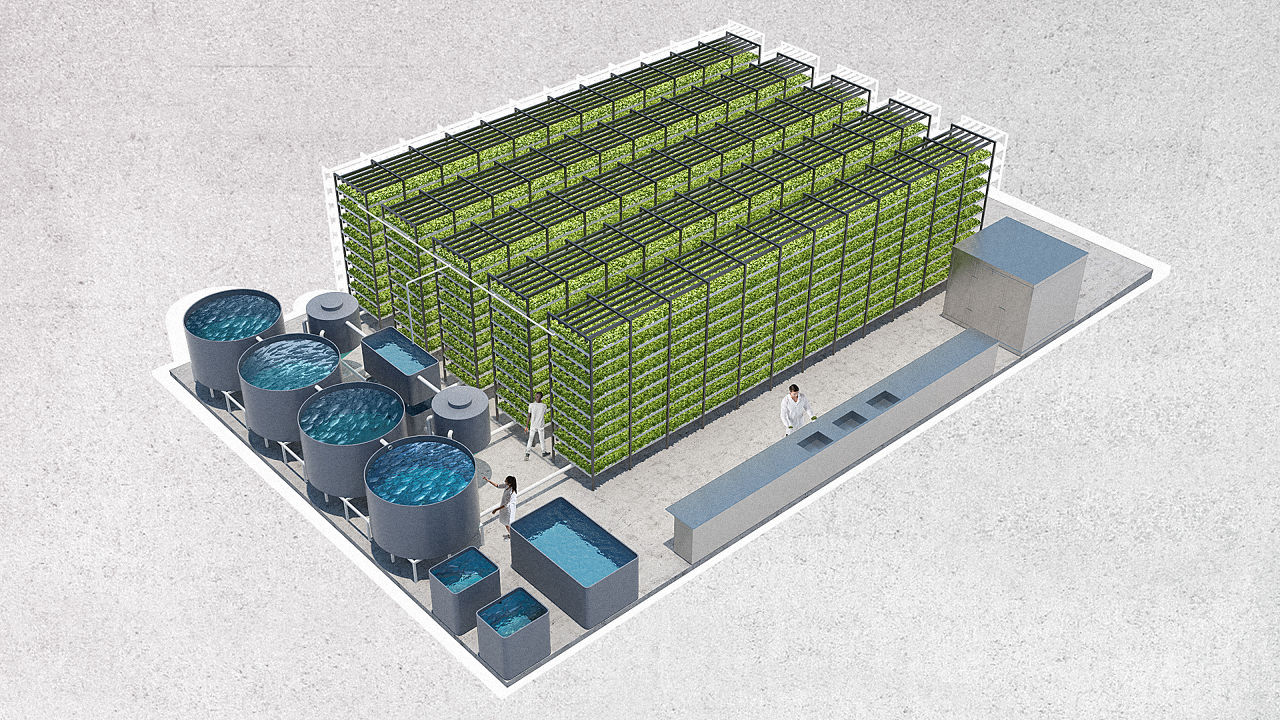A massive aquaponic lettuce and fish farm will grow in a for Indoor fish farming