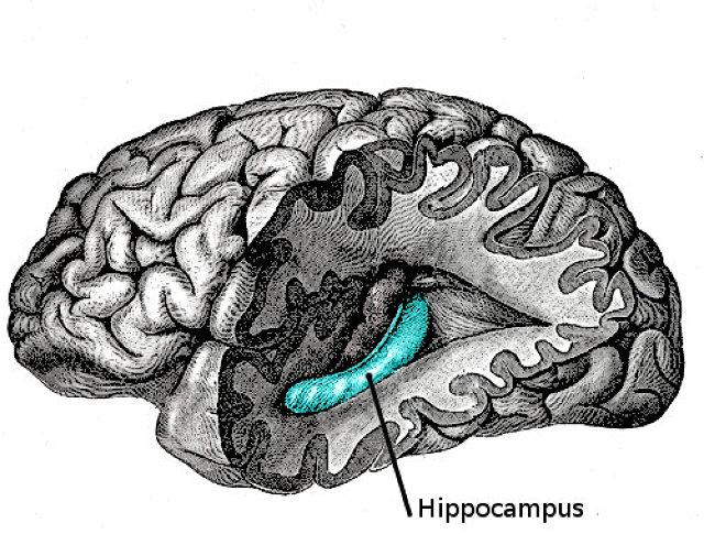 Increasing delta brain waves image 5