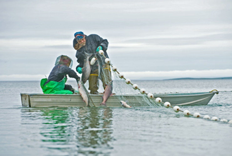 <p> Fishermen catch salmon in southwest Alaska.  </p>