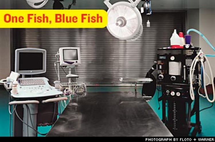 <p>The aquarium's medical suite includes this operating room, equipped with X-ray, ultrasound, and even anesthesia machines that perfuse water mixed with anesthesia across the gills of fish needing surgery.  The staff includes three full-time vets and a full-time nutritionist.</p>