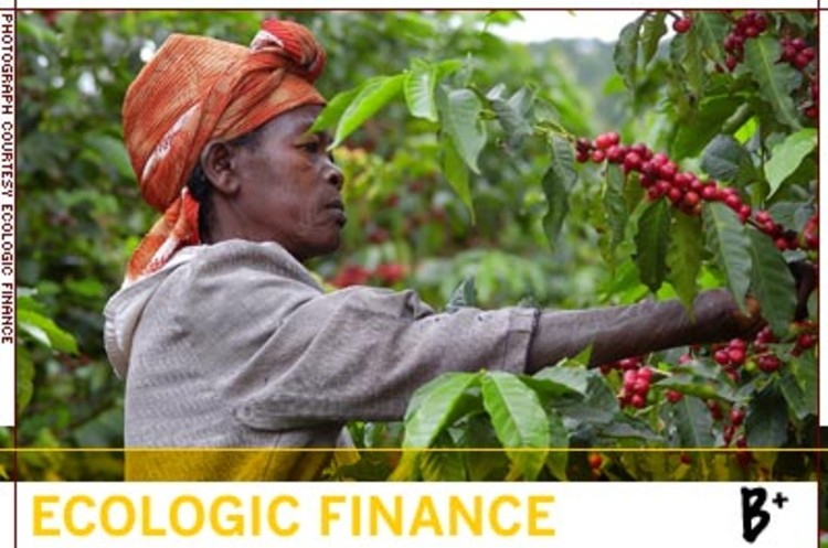 <p>Since 2000, EcoLogic Finance has provided over 250 loans with a gross value of nearly $45 million in support of more than 125 rural enterprises across 12 Latin American countries, six sub-Saharan African nations and two Southeast Asian states.</p>