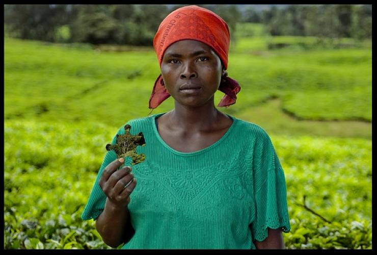 Evelyne Mukandekeze is one of the hundreds of workers who benefit from the tea plantations at the Gisakura Tea Factory.