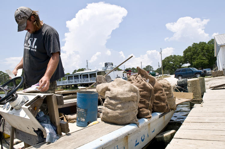 An Oysterman in east Point, Fla., gets his paperwork in order before he hauls up his bags from the morning catch.
