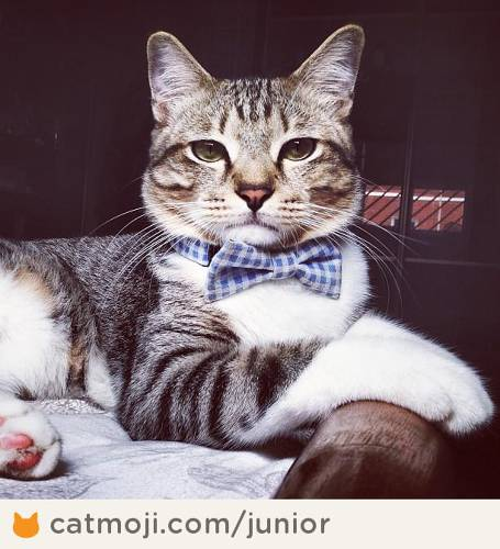 <p>Via <a href=&quot;http://catmoji.com/pic/3w/junior-has-a-bow-tie-your-argument-is-invalid/&quot; target=&quot;_blank&quot;>Junior Tan</a></p>