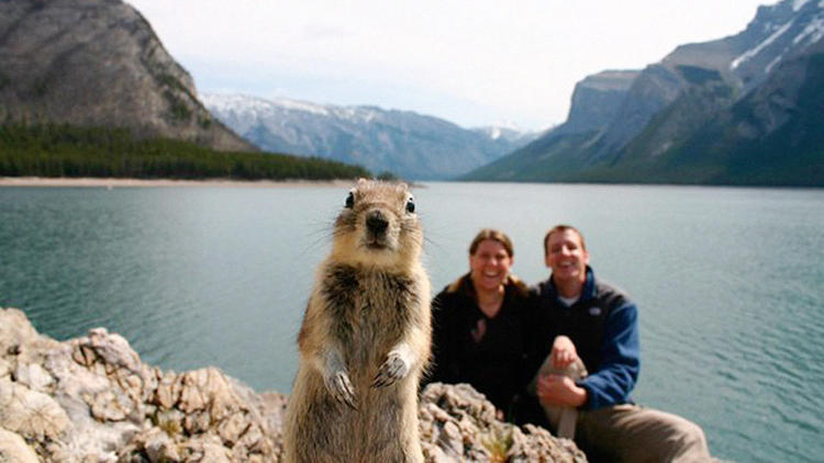 <p>&quot;That photo, where I crashed that cute Minnesotan couple's timer camera setup out at Lake Minnewanka, had upwards of 500 million hits online so the IT nerds here tell me. That many eyes towards Banff is great, even if it's a photo with a rodent in it. If you search 'photobomb squirrel' on Twitter, there is still pretty active posting of the pic, and it opens up the door for me to harass new Twitter folk and maybe put this magnificent national park on their travel radar.&quot;</p>
