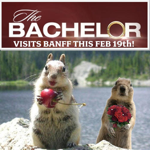 <p>&quot;The <a href=&quot;https://twitter.com/Banff_Squirrel/status/297047519731515392&quot; target=&quot;_blank&quot;>Bachelor visits Banff &amp; Lake Louise</a>, Tuesday night. I tried giving Cherry squirrel roses--she ate them.&quot;</p>