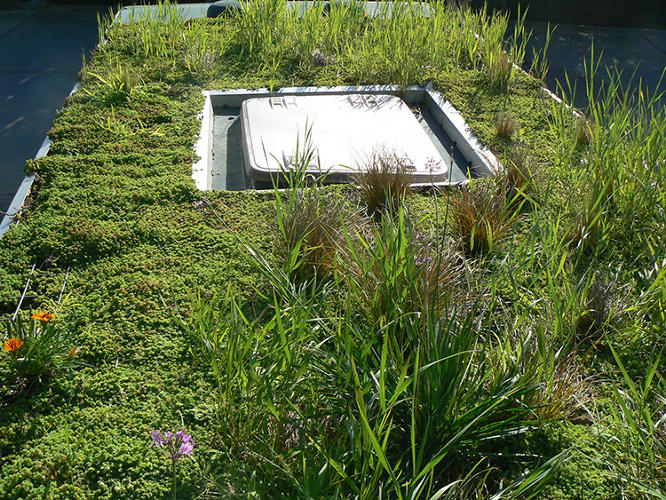 <p>The Phytokinetic garden is made of aquaponic foam housed in a steel grid. To help keep the surface moist, Ganen places a sedum carpet of small succulents on top, and then adds small shrubs and ferns, and a protective mesh. Most ingeniously, he waters the whole thing using waste from the bus's air conditioning unit.</p>