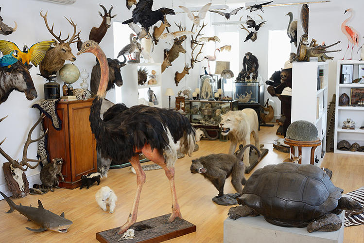 <p>For most of us, taxidermy is the stuff of horror (<em>Psycho</em>) or fin-de-siècle excess (Huysmans' <em>Against Nature</em>).</p>