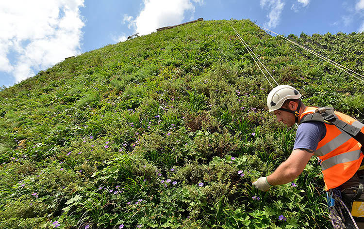 <p>All 16 tons of The Living Wall--the largest in the city--was recently installed on the side of the Rubens Hotel at the Palace.</p>