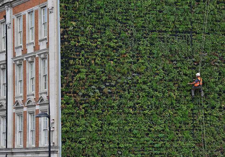 <p>Ecologist, green consultant, and urban planner Gary Grant has executed a series of green walls all over the U.K. and beyond.</p>