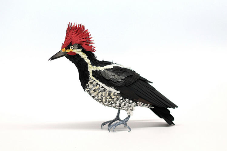 <p>Lineated Woodpecker</p>