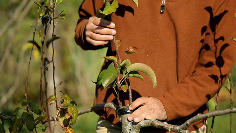 <p>For most people, organic farming sounds like the ideal. But biologist and educator Stefan Sobkowiak thinks a better answer is permaculture.</p>