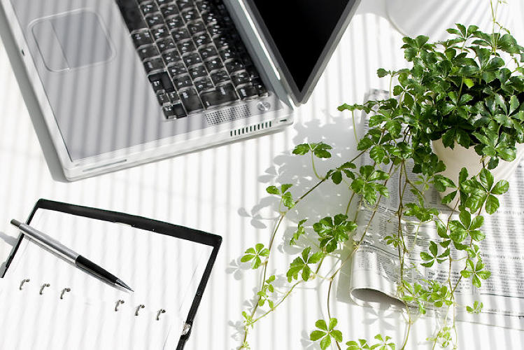 <p>Finding it hard to concentrate at your desk? Try getting a plant. In a pair of recent studies, a group of Norwegian scientists found that office foliage substantially increased worker productivity. They have a <a href=&quot;http://www.fastcodesign.com/3021742/evidence/want-to-be-more-productive-buy-some-desk-plants&quot; target=&quot;_self&quot;>few theories as to why</a>.</p>