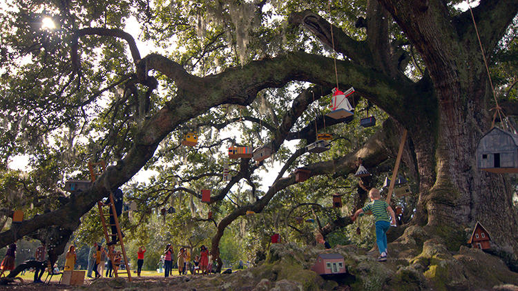 <p>Birdhouses hung from the Tree of Life in the Audubon Park in New Orleans.</p>