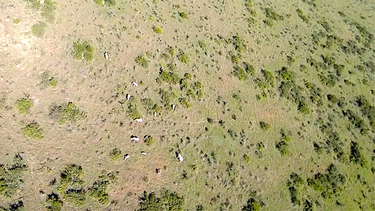 <p>The commercial drone startup just completed a two-week series of tests at the Ol Pejeta Conservancy in Kenya, which hosts endangered rhinos, chimpanzees, lions, elephants, and more.</p>