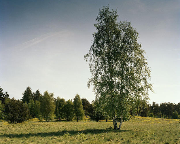 <p>Tip: look under the left side of the birch tree.</p>