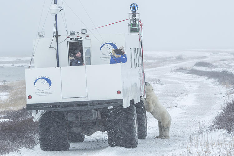<p>If you have a craving for a polar bear viewing session, Google has you covered.</p>