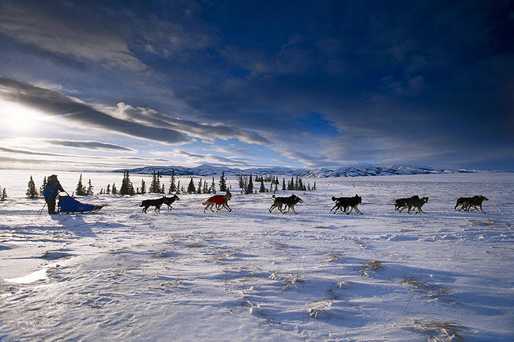 <p>The way he's seen it is stunning: from snowmobiles, from helicopters, or right up in dogs' snouts.</p>