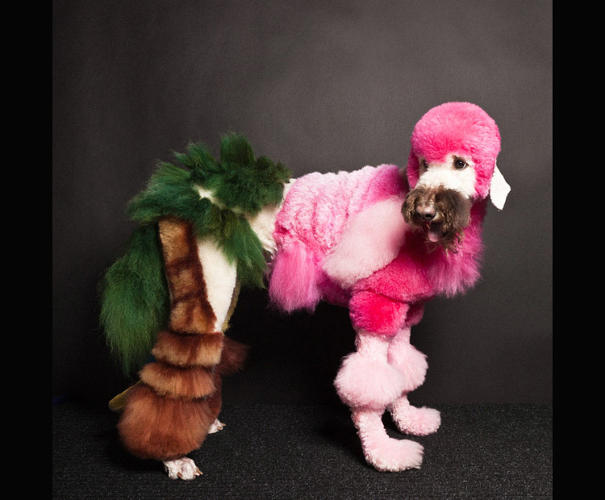 <p>Some of these dogs look understandably embarrassed or confused, but others just look smug, convinced their new fur is super fly.</p>