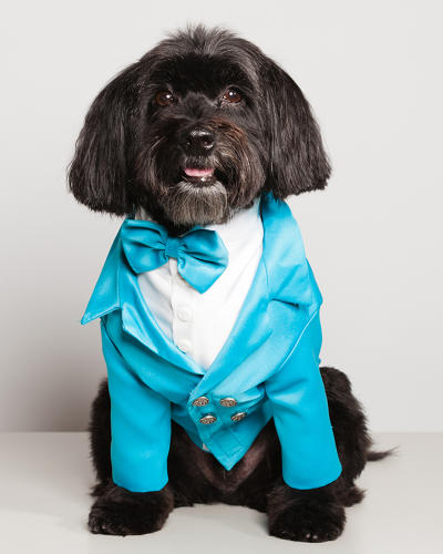 "<p>""These dog-owners have a love of fashion and flamboyance, and attending these parties and benefits with their dolled-up doggies enables them to socialize with a like-minded group,"" Nathan says.</p>"