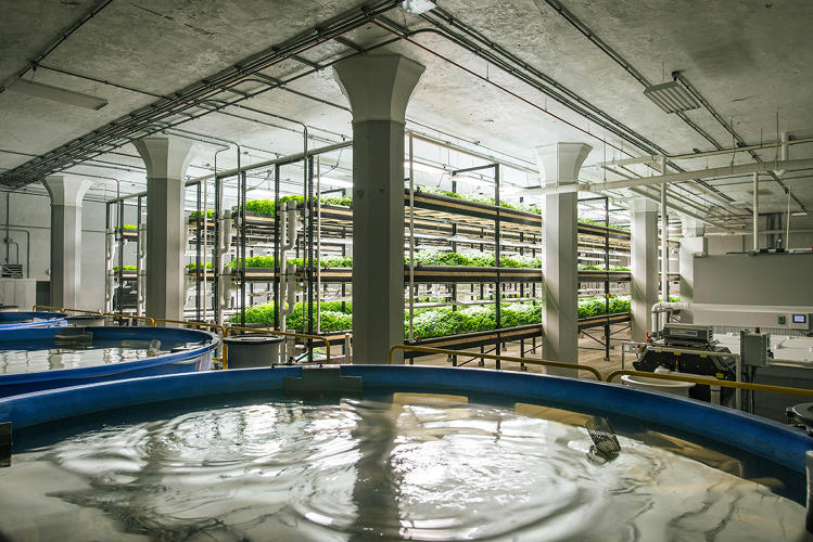 <p>It's the home of Urban Organics, a futuristic farm housed inside a long-vacant structure on the former site of Hamm's Brewery in East St. Paul.</p>