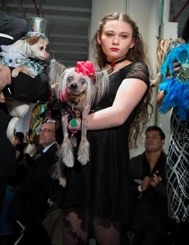 <p>Amelia walked the runway in Brooklyn Fashion Week, with their blind, toothless, 15-pound Chinese Crested, Nora, wearing in a Dog Couture Anthony Bandit-Rubio gown.</p>
