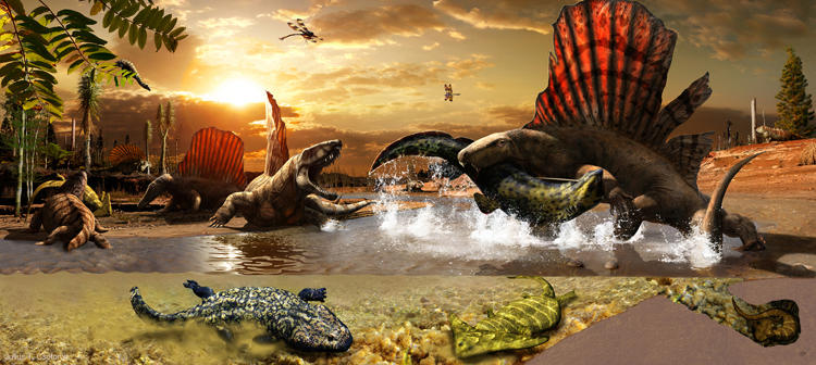 <p>Between dry spells, synapsid predators such as Secondontosaurus and several species of Dimetrodon take advantage of the xenacanthid shark- and amphibian-choked streams in a dynamic ecosystem investigated by Dr. Robert Bakker's team near Seymour, Texas.</p>