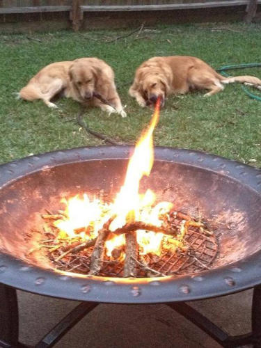 <p><a href=&quot;http://reddit.com/r/outside/comments/20jrqt/how_can_i_teach_my_pet_this_skill/&quot; target=&quot;_blank&quot;>Fire-breathing dog</a></p>