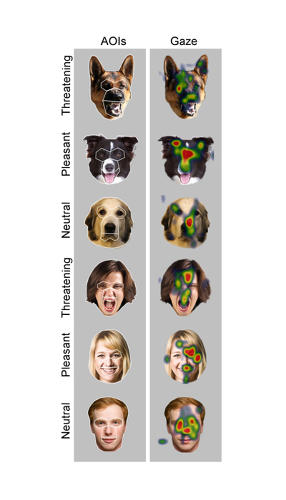 <p>Dogs not only engage in &quot;social gazing behavior&quot; that mimics that of humans, but they also change their viewing behavior depending on the threat they perceive.</p>