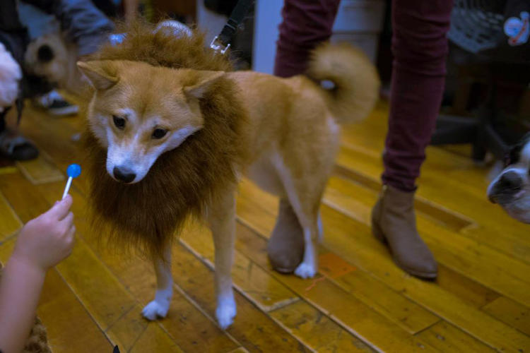 <p>At Etsy, even furry four-legged children are encouraged to attend family parties.</p>