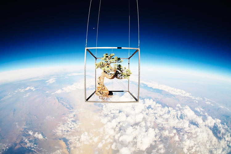 <p>Makoto's Exobiotanica project involved launching a bonsai tree and bouquet of flowers 80,000 feet into the stratosphere.</p>
