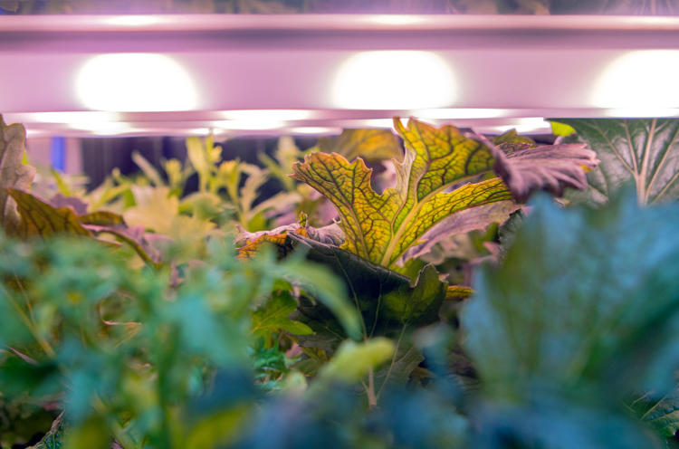 <p>The first prototype is currently in a Metro supermarket in Berlin growing greens and herbs.</p>