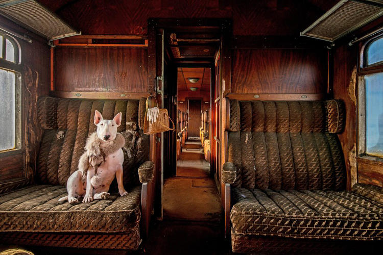 <p>My bull terrier Claire photographed in an abandoned train, one of a series that I am currently working on.</p>