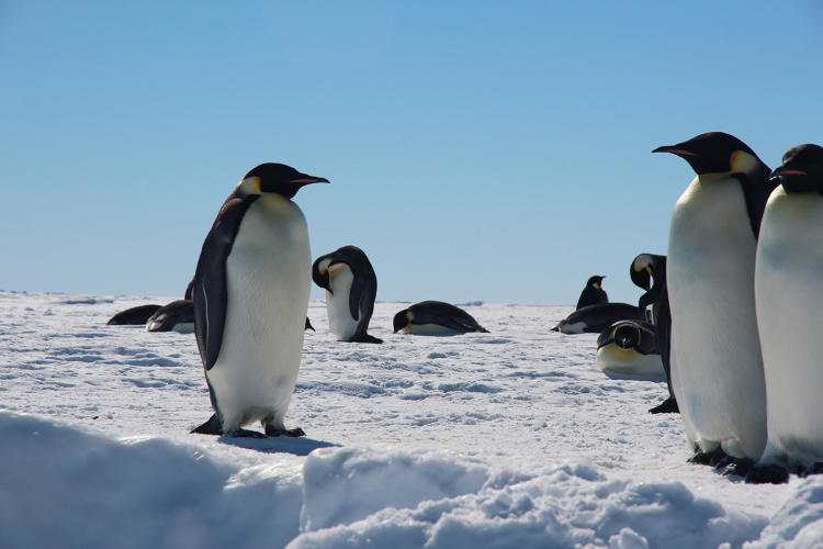 <p>If you need a break at work, trying counting penguins.</p>