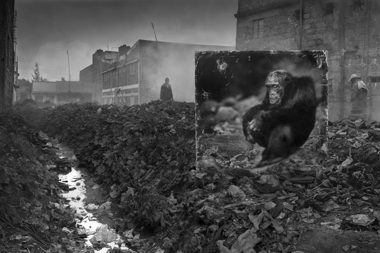 <p><em>Alleyway with Chimpanzee</em>, 2014</p>