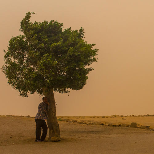 <p>In this May 27, 2015, photo, a man takes cover under a tree in Mokkatam as a sandstorm and extreme temperatures grip Cairo. Today Cairo registered the highest temperatures on earth, officially a smoldering 46 degrees C (114 degrees F). It is unusual for Cairo to experience such extreme heat and a sandstorm of such magnitude in late May.</p>