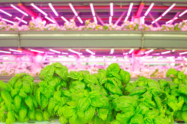 <p>Seventy-five percent of U.S. consumers live within 200 miles of a city, where vertical farming's advantages over outdoor agriculture make it particularly appealing.</p>