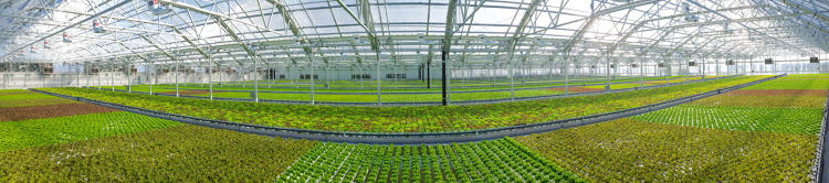 <p>Gotham Greens opened a 75,000-square-foot rooftop farm in Chicago's Pullman Park neighborhood and currently employs 45 people.</p>
